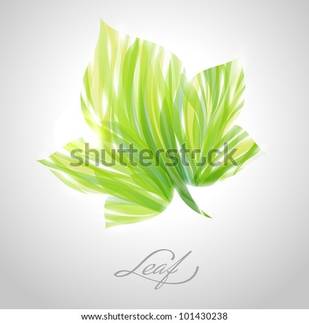 Shiny green striped maple leaf. Vector illustration. - stock vector