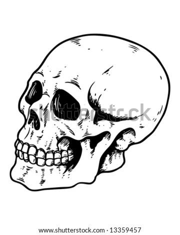 side profile skull - stock vector