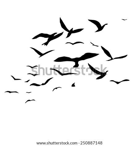 Flock Of Birds Stock P...