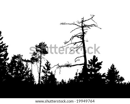 silhouette dry tree in wild wood - stock vector