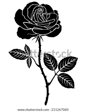 Silhouette image of beautiful rose flower