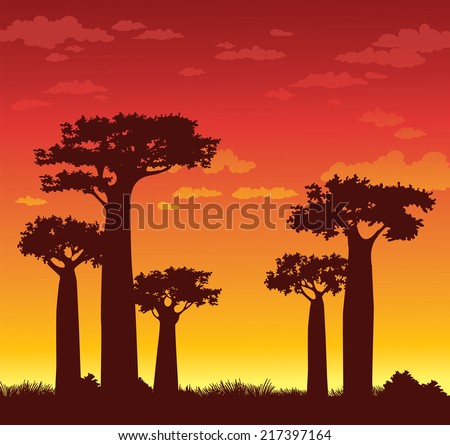 Silhouette of baobabs on a sunset sky background. Nature of Madagascar. - stock vector