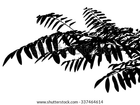 Silhouette of branches of a tree - stock vector