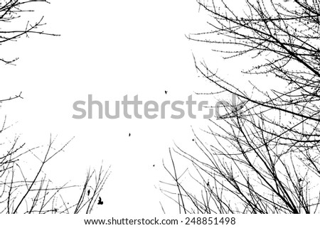 Silhouette of branches of a tree with birds. Vector - stock vector