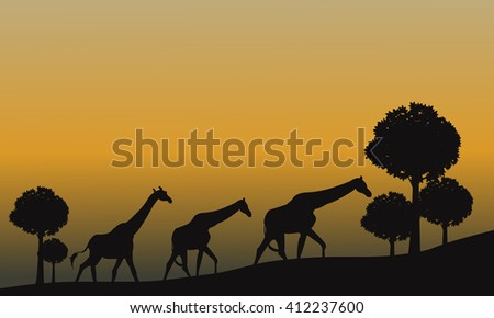 Silhouette of giraffe and yellow sky at the sunset - stock vector