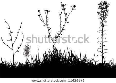 silhouette of grass and herbs