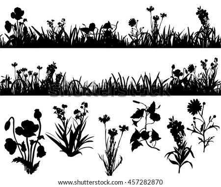 silhouette of grass and plants, in isolation,vector, isolated, field flowers