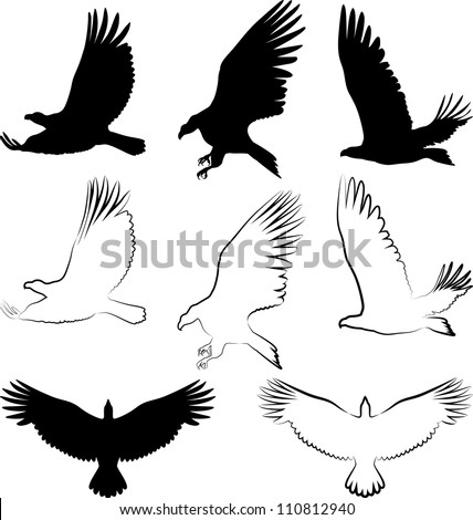silhouette of hawk and eagle - stock vector