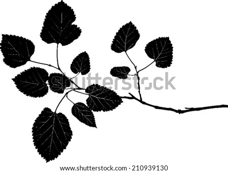 Silhouette of mulberry twig with leaves  - stock vector