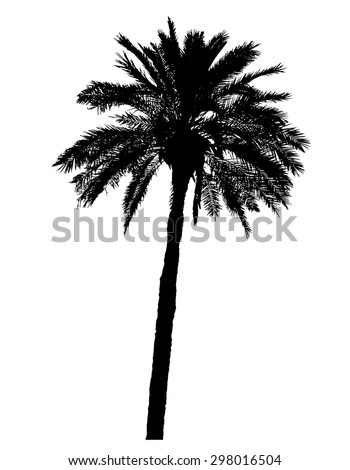 silhouette of palm trees realistic vector illustration isolated on white background - stock vector