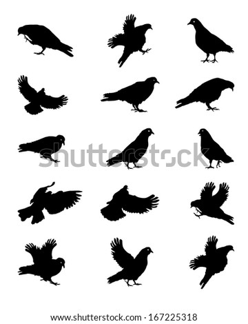 Silhouette of Pigeons Isolated on White Vector Illustration
