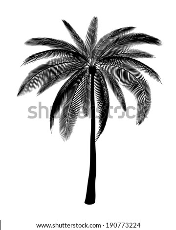 Silhouette of single palm, EPS 8. - stock vector