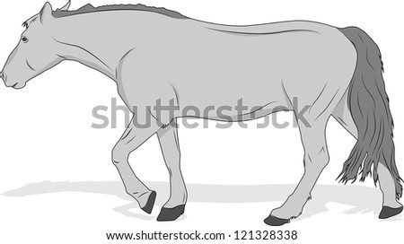 Silhouette of walking horse - stock vector
