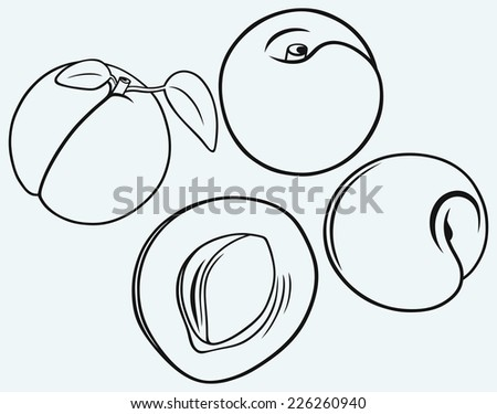 Silhouettes apricot with leaves isolated on blue background - stock vector