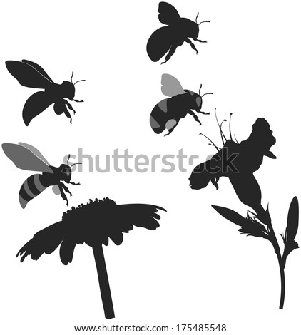 silhouettes bee and bumblebee collecting pollen from flowers, white background - stock vector