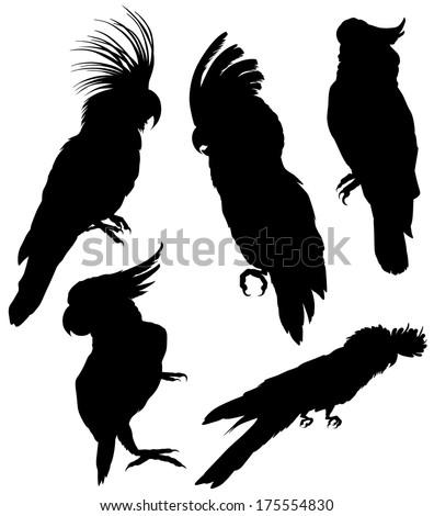silhouettes cockatoo - stock vector