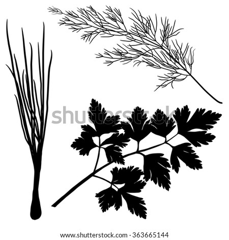 silhouettes dill parsley onion isolated on white background - stock vector