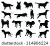 Silhouettes dog breeds-vector - stock vector