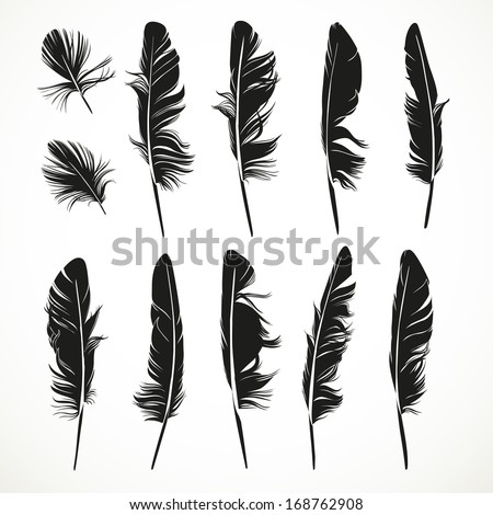 Silhouettes feathers vector illustration - stock vector