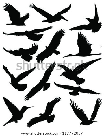 Bird Silhouette Stock Photos, Royalty-Free Images ...