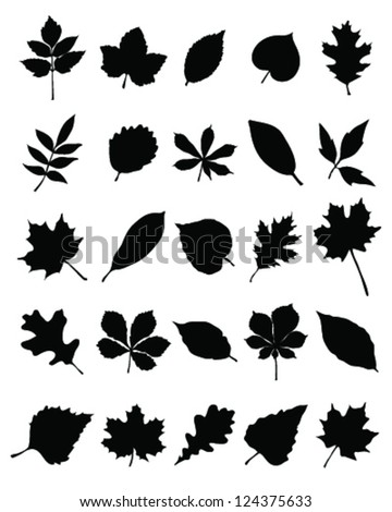 Silhouettes of foliage-vector
