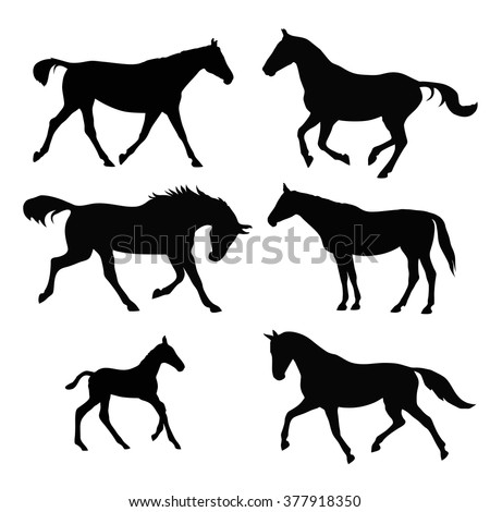 Silhouettes of galloping and trotting horses and a foal