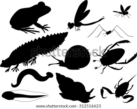 silhouettes of inhabitants of pond