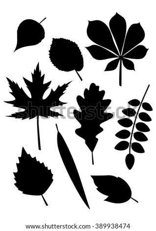 Silhouettes of leaves of various trees (poplar, elm, chestnut, maple, oak, acacia, birch, willow, ash). Vector collection of leaf isolated on white background. - stock vector