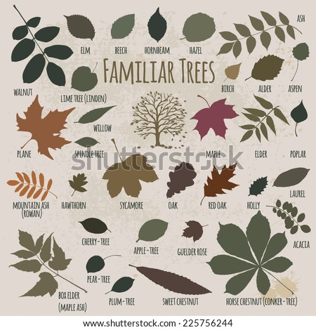 Silhouettes of tree leaves (elm, beech, ash, walnut, linden, birch, alder, aspen, willow, maple, elder, poplar, mountain ash, rowan, hawthorn, oak, acacia, chestnut, conker). Vector illustration. - stock vector