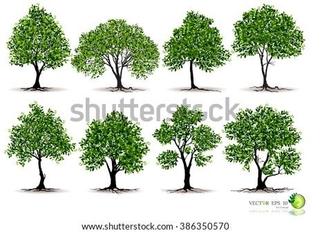 silhouettes of trees,tree branch,tree casts a shadow,tree Bonsai,beautiful trees,Big tree,realistic tree,tree vector,tree icon,tree set,tree vector,trees collection,tree graphic,tree root,Tree canopy - stock vector