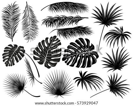how to draw a palm leaf