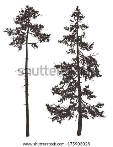 silhouettes of two pine trees on a white background - stock vector