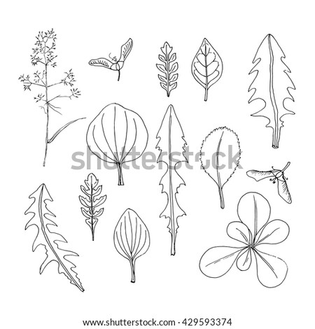 Simple organic shapes collection. Doodle leaves. Hand drawn design elements.Vector illustration in black and white.