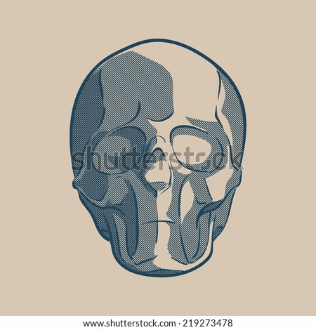 Simplified drawing of a human skull. Linear drawing with stroked shades. EPS8 vector illustration. - stock vector