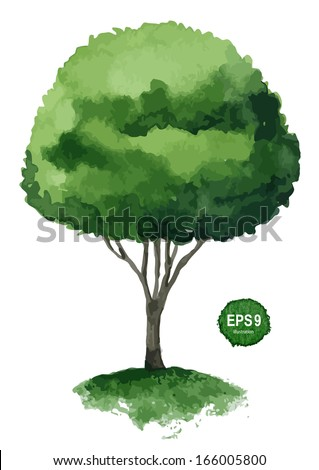 Single green tree isolated on white background. Vector illustration - stock vector