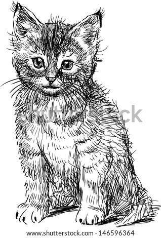 sitting kitten - stock vector