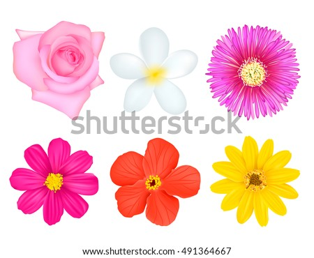 Six top view isolated realistic bloom images set with various flowers blossom on blank background vector illustration