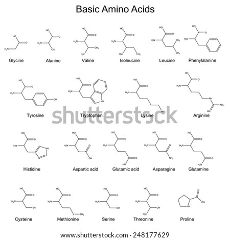 Skeletal structures basic amino acids 2 d stock vector royalty free skeletal structures of basic amino acids 2d vector eps 8 altavistaventures Images