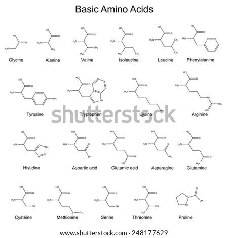Skeletal structures basic amino acids 2 d stock vector royalty free skeletal structures of basic amino acids 2d vector eps 8 thecheapjerseys Gallery