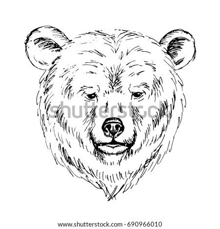 Bear face outline