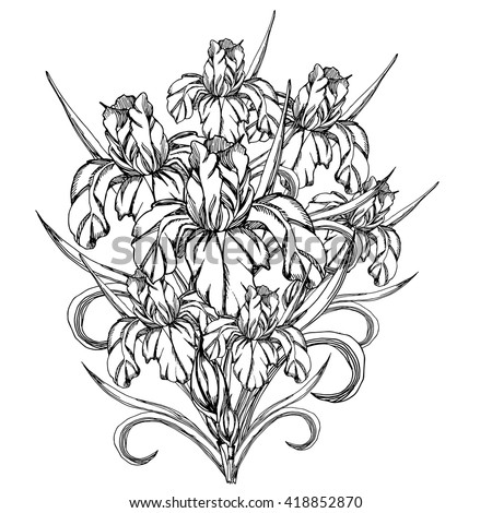 Number Names Worksheets pictures of flowers to trace : Sketch Flowervector Decorative Trace Iris Flowerstemplate Stock ...
