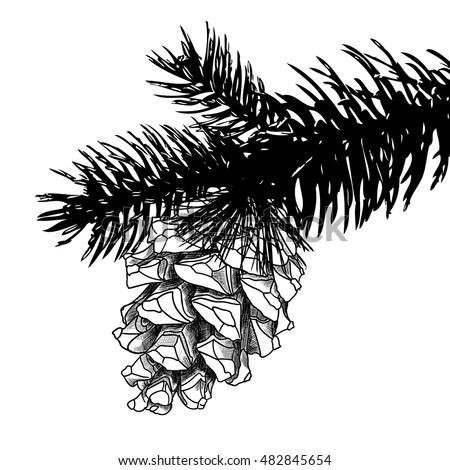 christmas pine cone drawing - photo #23