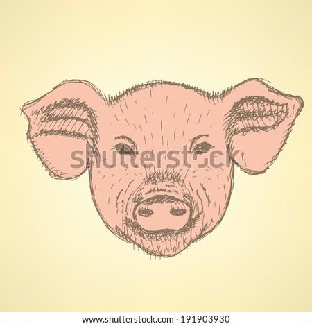 Sketch head of pig, vector vintage background - stock vector