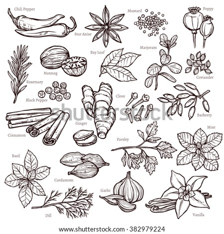Sketch Herbs And Spices Set