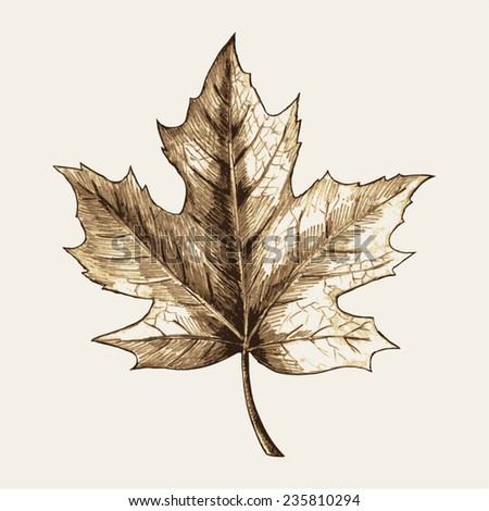 Sketch illustration of a maple leaf - stock vector