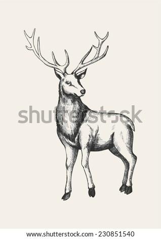 Sketch illustration of a reindeer - stock vector