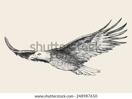 Sketch illustration of a soaring eagle - stock vector