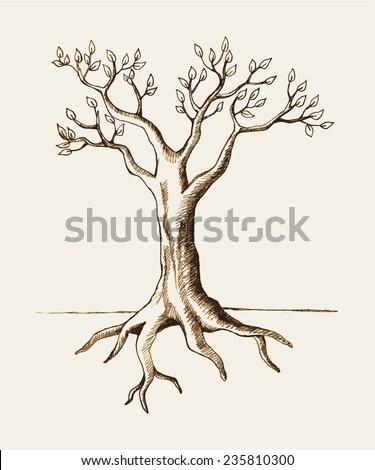 Sketch illustration of a tree - stock vector