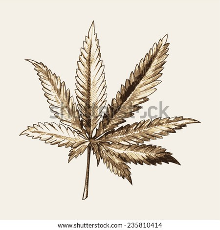 Sketch illustration of marijuana (cannabis) or hemp leaf - stock vector
