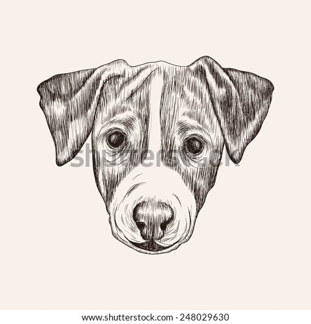 Sketch Jack Russell Terrier Dog. Hand drawn realistic face illustration. - stock vector